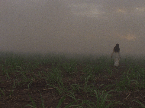 A still image of a person with long black hair wearing a white long-sleeved white dress. The person is walking through a field of soil and large green stalks. The sky is shrouded in smoke.